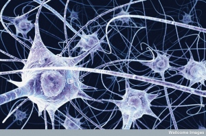 It wasn't me, it was my neurons!